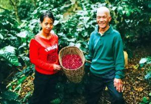 Cordillera Coffee